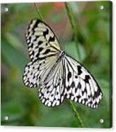 Butterfly Charm Acrylic Print