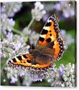 10088 Small Tortoiseshell Butterfly Acrylic Print