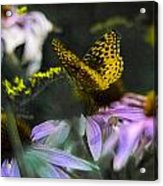 Butterfly Coneflowers 2 Acrylic Print