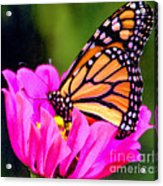 Butterfly Cup Acrylic Print