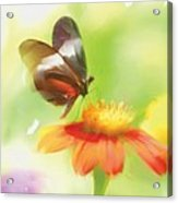 Butterfly Digital Painting Acrylic Print