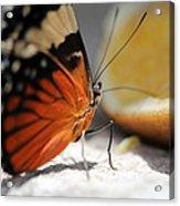 Butterfly Acrylic Print