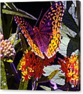 Butterfly Don't Fly Away Acrylic Print