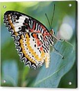 Butterfly Dreams Acrylic Print