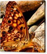 Butterfly Enchantment Acrylic Print