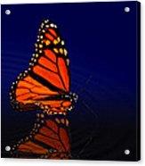 Butterfly Floats Acrylic Print