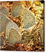 Butterfly Gathering Acrylic Print