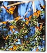 Butterfly Goodbye Acrylic Print