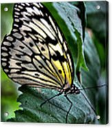 Butterfly - Green Leaf Acrylic Print