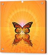 Butterfly II Acrylic Print