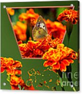 Butterfly In A Sea Of Orange Floral 02 Acrylic Print