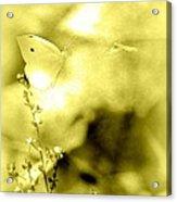 Butterfly In Flight - 2013-10-187 Acrylic Print