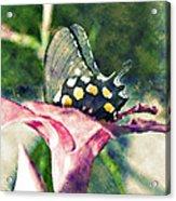Butterfly In Flower Acrylic Print
