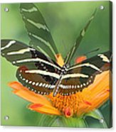 Butterfly In Motion #1967 Acrylic Print