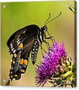 Butterfly In Nature Acrylic Print