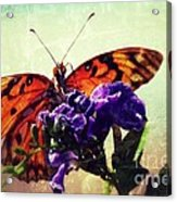 Butterfly Kissed Acrylic Print