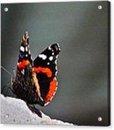 Butterfly Landing Acrylic Print