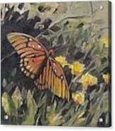 Butterfly Meadow With Yellow Flowers Acrylic Print