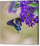 Butterfly Mountain Acrylic Print