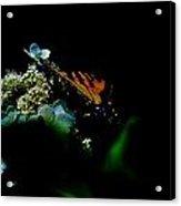 Butterfly Night Acrylic Print
