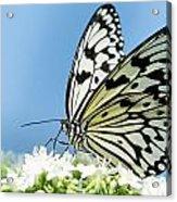 Butterfly On Blue Acrylic Print