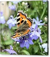 Butterfly On Blue Flower Acrylic Print