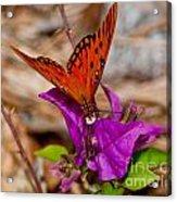 Butterfly On Bouganvilla Acrylic Print
