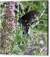Butterfly On Bush Acrylic Print