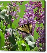 Butterfly On Lilac Acrylic Print by Diane Mitchell