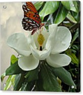 Butterfly On Magnolia Blossom Acrylic Print