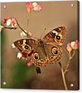 Butterfly On Pink Acrylic Print