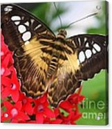 Butterfly On Red Flower Acrylic Print