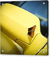 Butterfly On Sports Car Mirror Acrylic Print by Elena Elisseeva