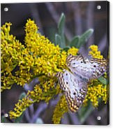 Butterfly On Yellow Acrylic Print
