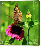 Butterfly On Zinnia Flower 2 Acrylic Print
