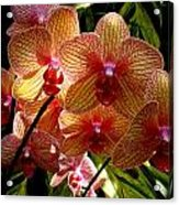 Butterfly Orchids Acrylic Print