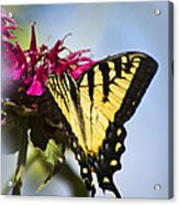 Butterfly Out Of The Blue - Blue Butterfly Art Acrylic Print