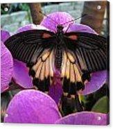 Butterfly Palace Acrylic Print
