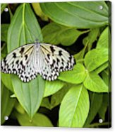 Butterfly Perching On Leaf In A Garden Acrylic Print