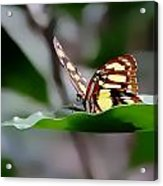 Butterfly Planted Acrylic Print