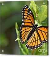 Butterfly Scene Acrylic Print