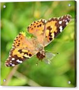 Butterfly Series 1 Of 5 Acrylic Print