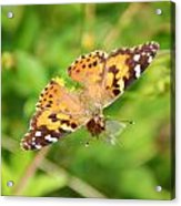 Butterfly Series 2 Of 5 Acrylic Print