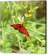 Butterfly Series 3 Of 5 Acrylic Print