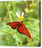 Butterfly Series 4 Of 5 Acrylic Print