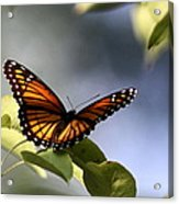 Butterfly -  Soaking Up The Sun Acrylic Print