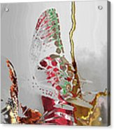 Butterfly Acrylic Print by Soumya Bouchachi