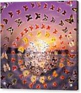 Butterfly Sunset Acrylic Print