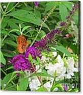 Butterfly Surprise Acrylic Print