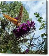Butterfly Acrylic Print by Susan Sidorski